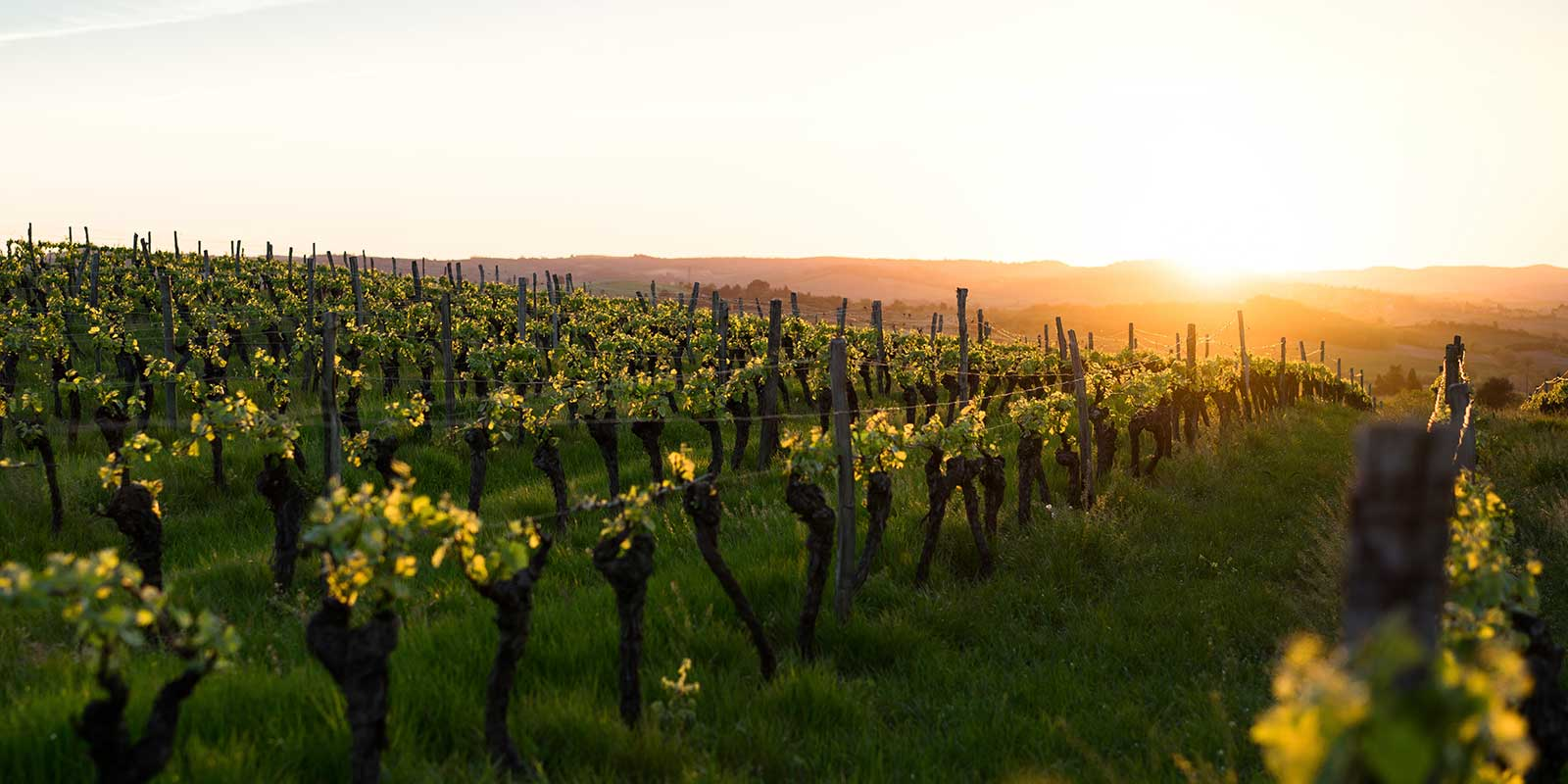 b-boer-vineyards